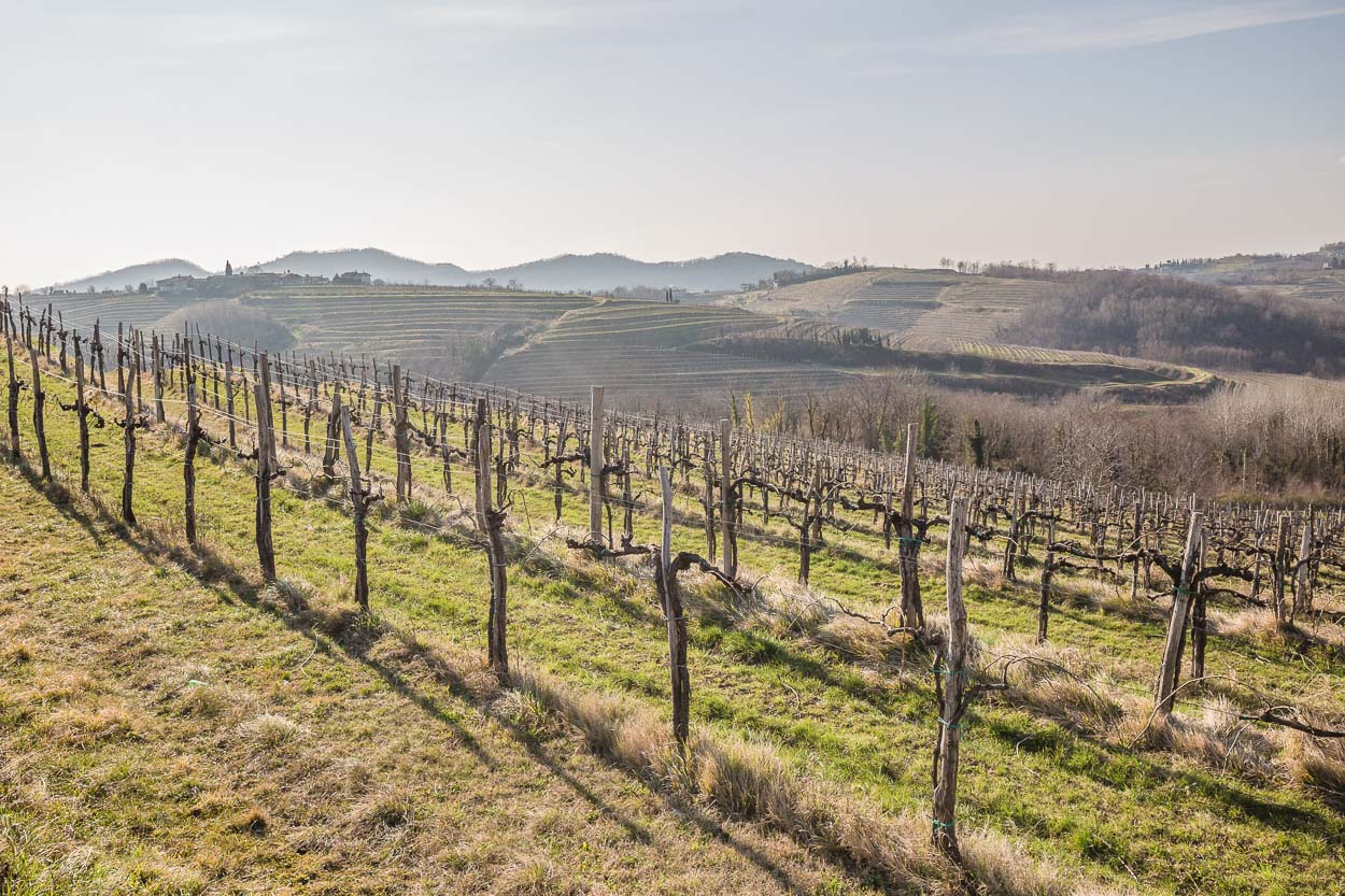 The vineyards of Goriska Brda