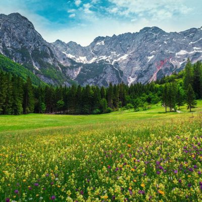 Meadows full of flowers surrounded by the Alps in Logar Valley