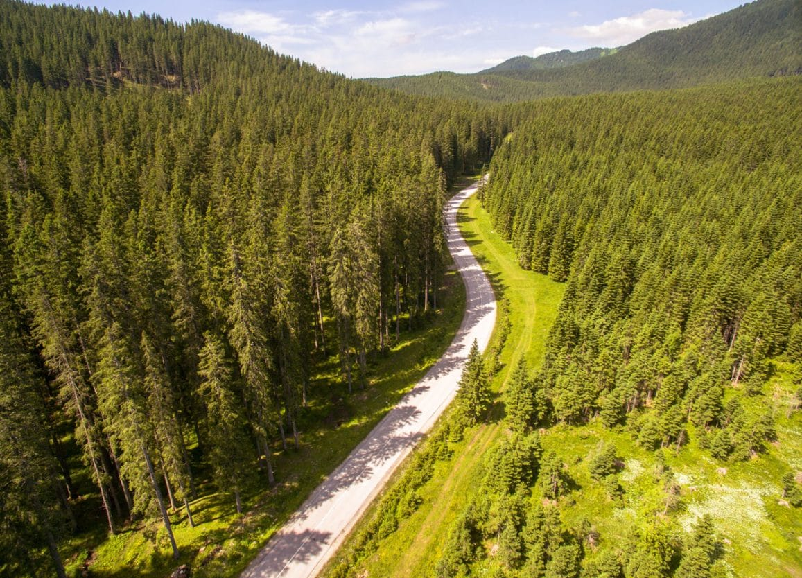 Road surounded by Pokljuka forest