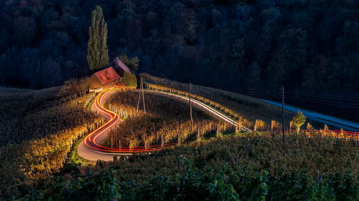 Heart shaped vineyard in the evening