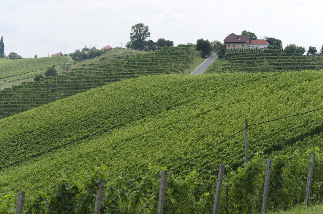 Jeruzalem Slovenia vineyards