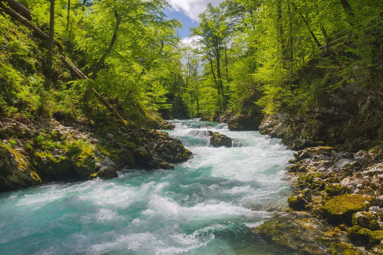 Radovna river in Slovenia