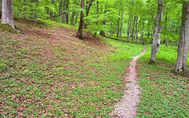 Single trail around Viscri