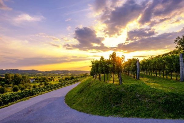 Vipava valley sunset and vineyards