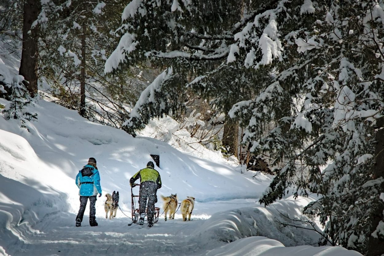 dog sledding slovenia
