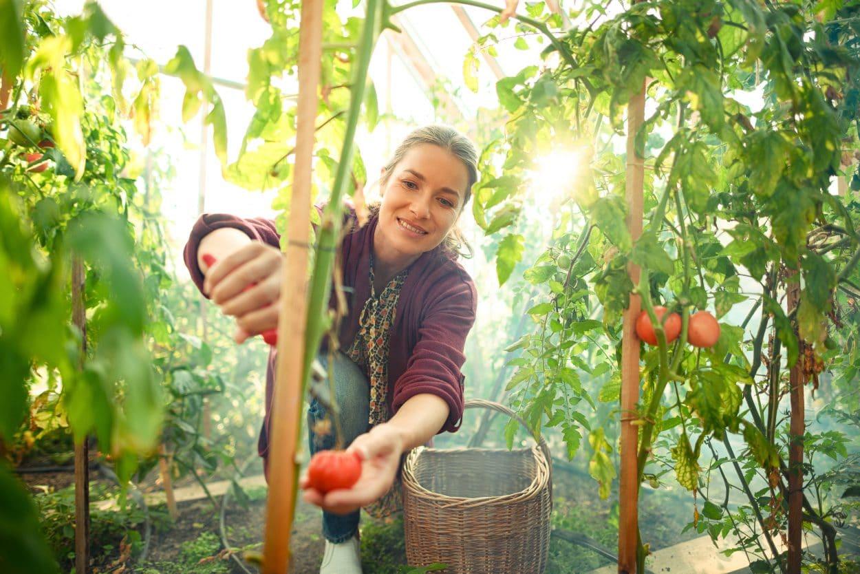Garden Village Bled garden