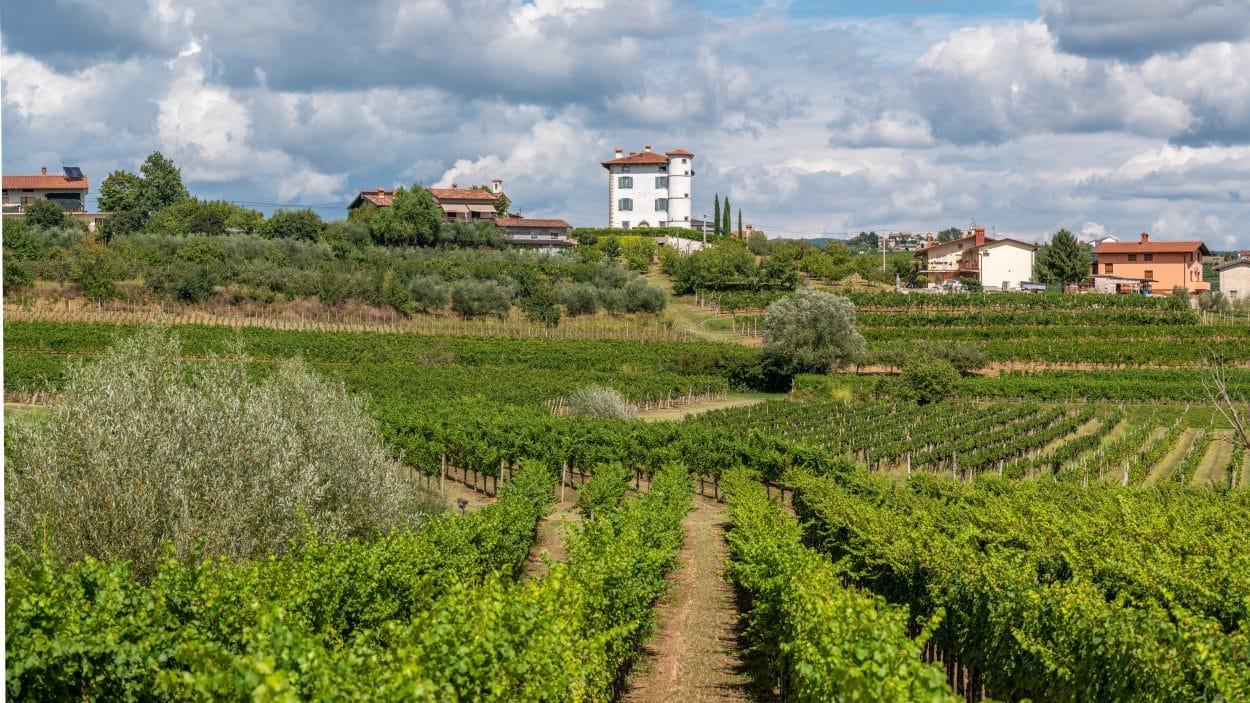 Gredič Castle among vineyards in Goriška Brda