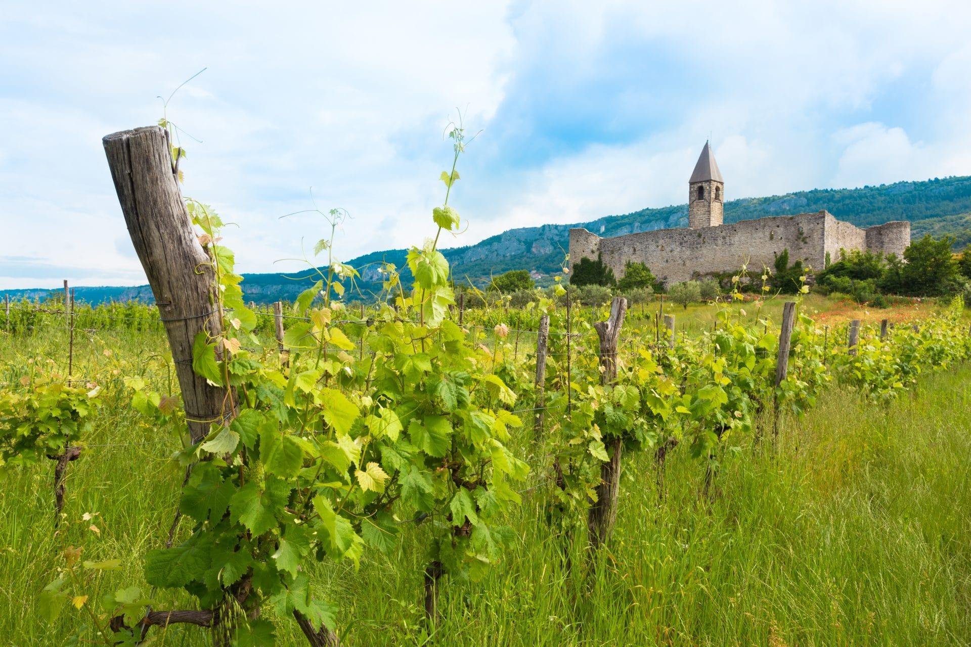 Vineyards around Hrastovlje